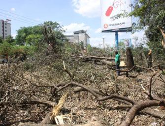 Власти Найроби накажут оператора, вырезавшего деревья в городском парке ради видимости билбордов