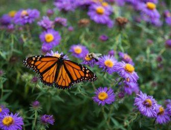 Из рекламных листков Herbal Essences прорастут цветы для бабочек