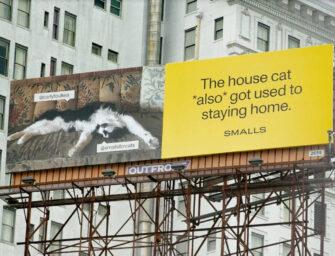 Котики в рекламе кормов Smalls хотят, чтобы их хозяева поменьше шастали по улицам