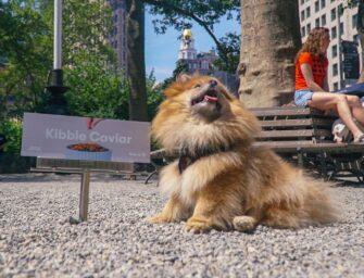 Виробник холістік-кормів Jinx розповів про співпрацю з Target в OOH-кампанії, що таргетована на собак